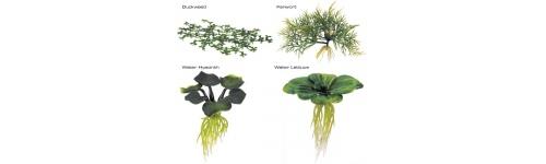Rośliny do oczka